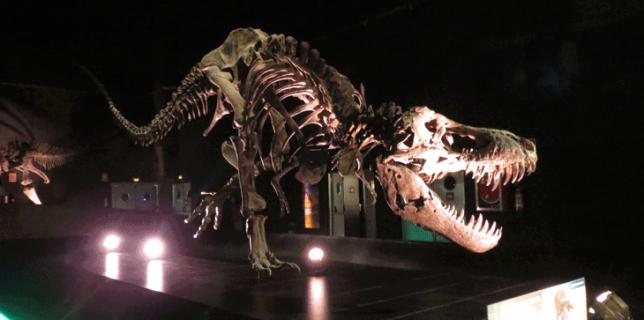 Sala-de-los-dinosaurios-dinopolis-carnivoro