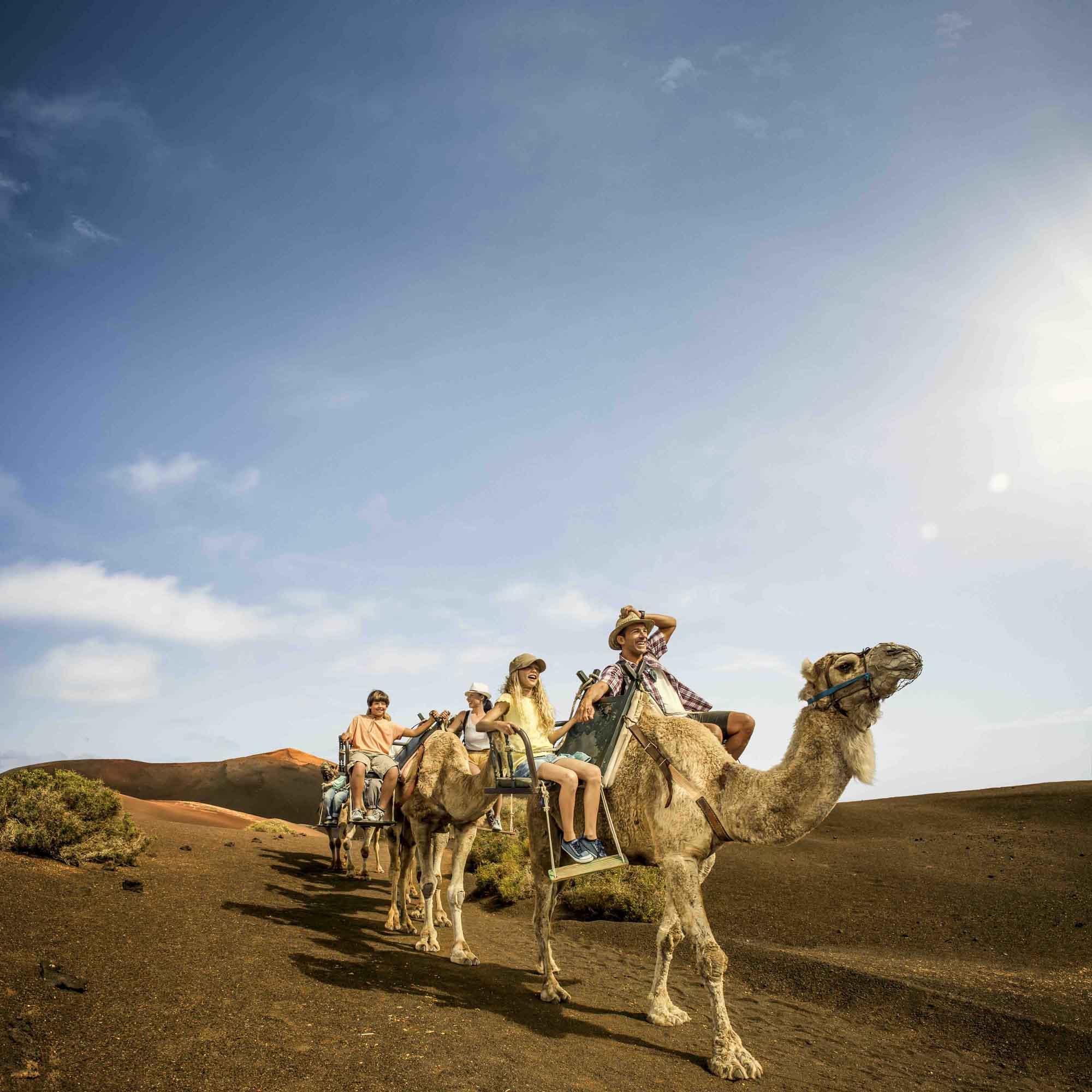 Paseo en camello en Canarias