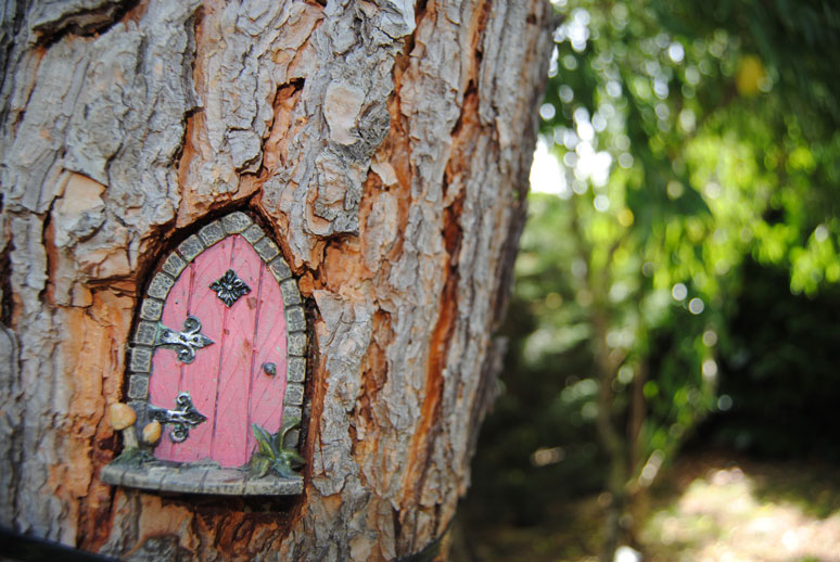 Un d a en el bosque encantado con los ni os - Alojamientos en el bosque ...