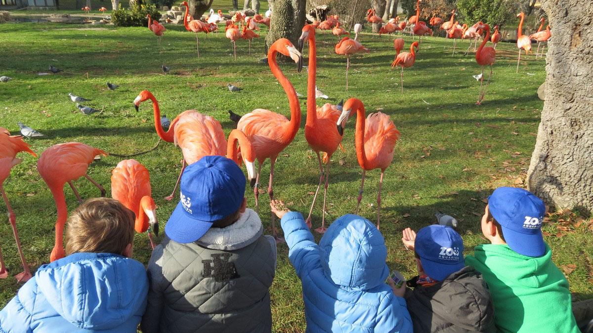 campamentos-navidad-zoo