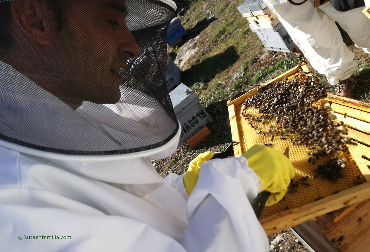 apiturismo-colmenas-cigales