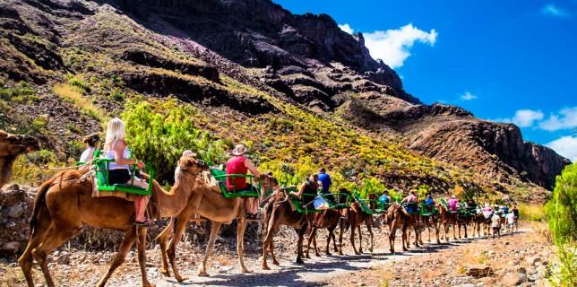 paseo-camello-gran-canaria