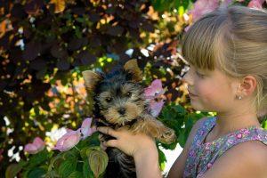 La compañía de un perro es positiva para los niños