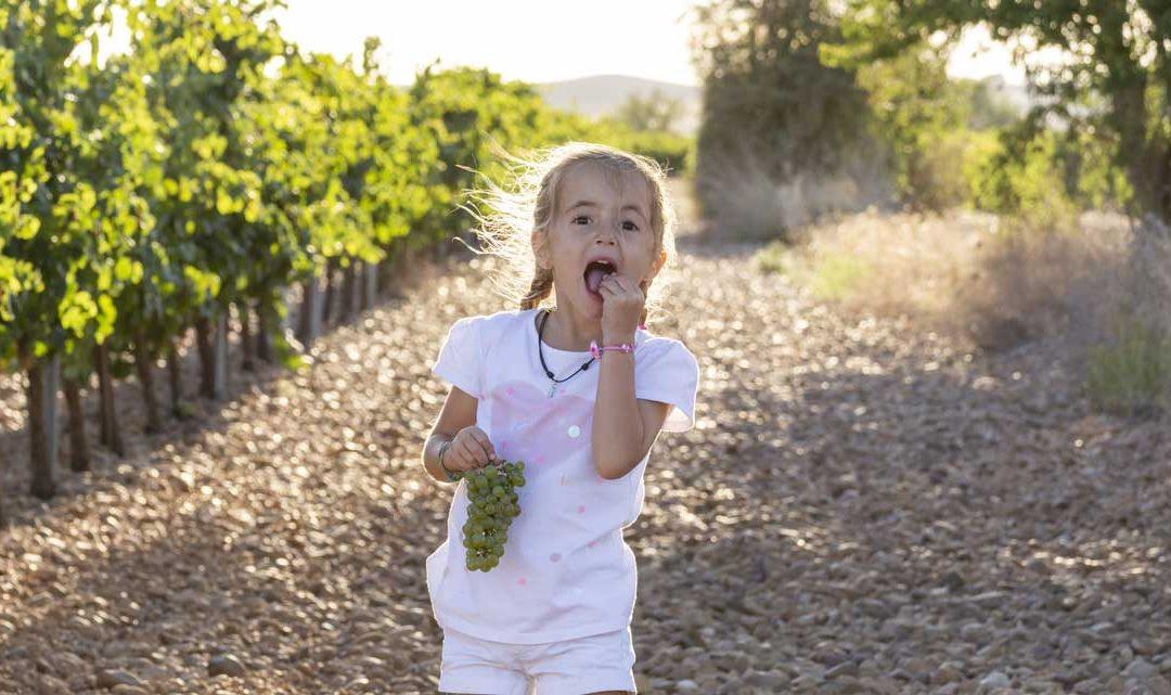La vendimia en familia con la Ruta del Vino Cigales
