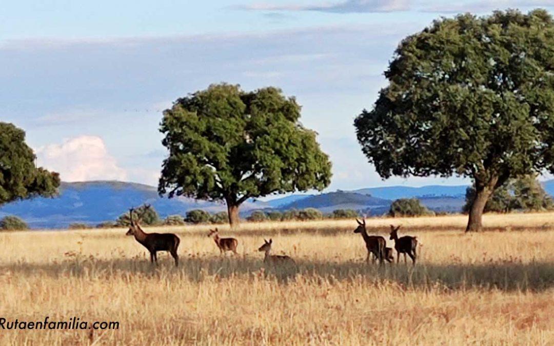 Entreparques: ciervos, volcanes y titanes para descubrir con tus hijos en Ciudad Real